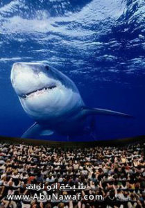 sharks3d-788122-209x300 رحلة إلى لندن – الجزء الثانى