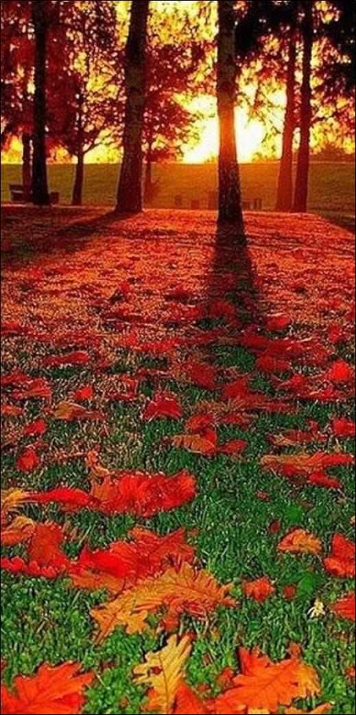 الوان الخريف في الجنوب الالماني
