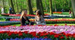 مهرجان التوليبت في هولندا