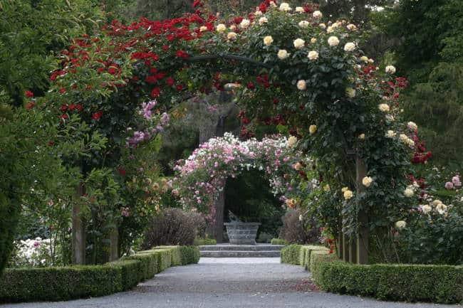 الحدائق النباتية كرايست شيرش Christchurch Botanic Gardens