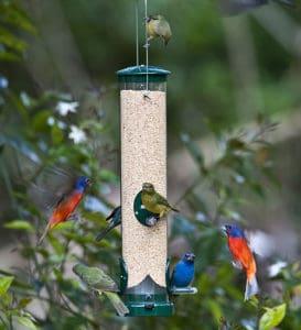 غذاء الطيور