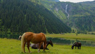 Photo of رحلتي مع الخيول البرية على ضفاف بحيرة هنترسي .