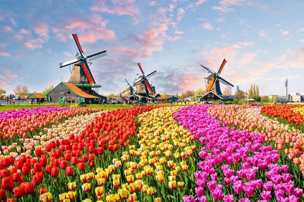 الشنغن الهولندية